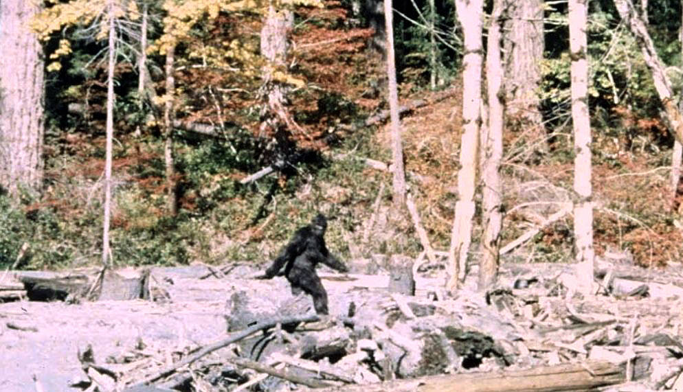 Frame 352 of the 1967 Patterson-Gimlin film, which allegedly depicts a Sasquatch walking in Northern California.